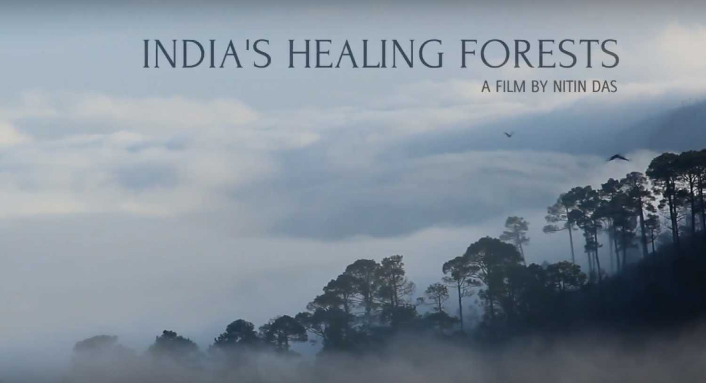 Resultado de imagen de india,s healing forests, nitin das